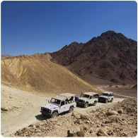 eilat-safari