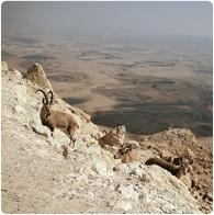 negen-wueste-reisen-israel